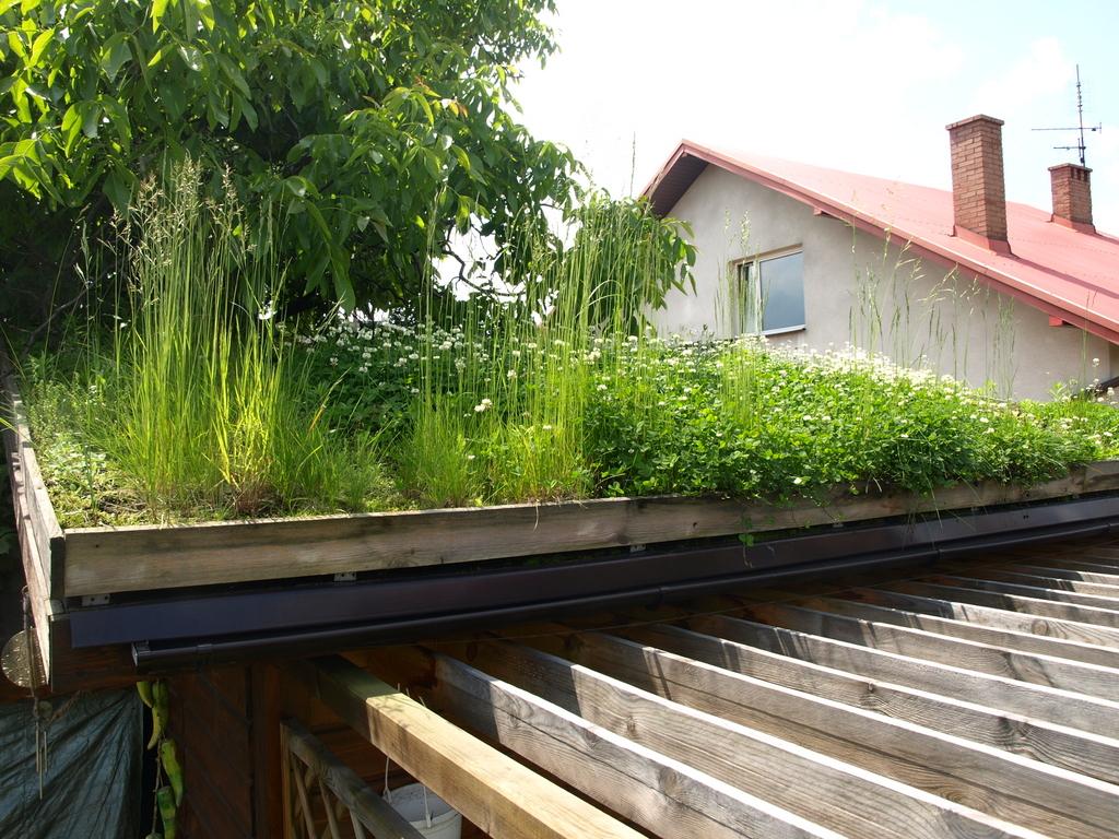 Nasz Wiosenny Eksperyment Zielony Dach Na Altanie