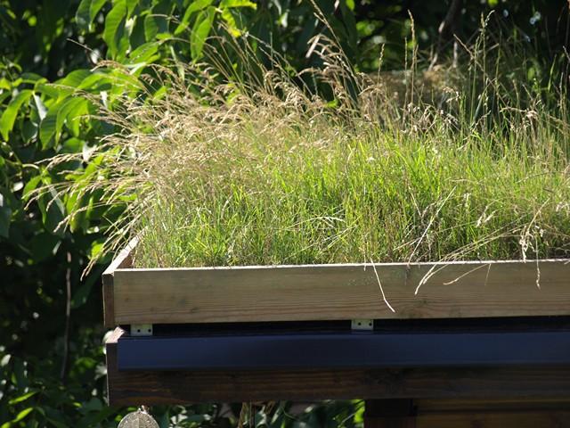 Nasz wiosenny eksperyment – zielony dach na altanie :)