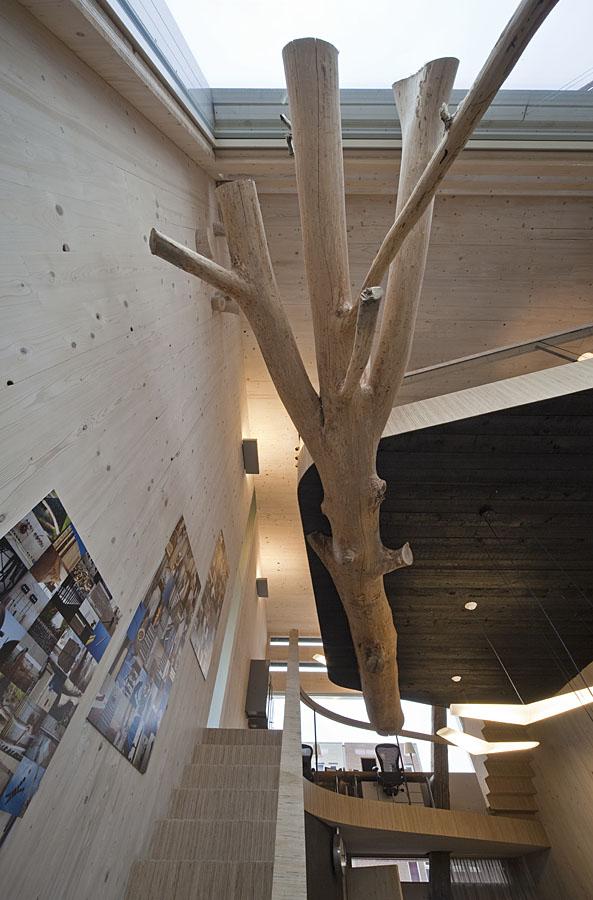 House 2.0 – drzewo pod podłogą