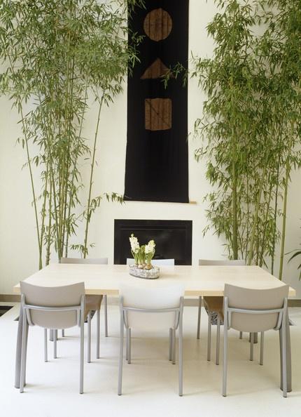 Ogr d w domu 35 zielonych inspiracji awx2 blog - Arboles de interior con poca luz ...